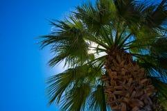 Palmträd på stranden Royaltyfria Bilder