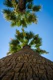 Palmträd på stranden Arkivfoto