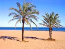 Palmträd på stranden Arkivfoton
