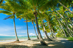 Palmträd på stranden av Palm lilla viken Arkivfoton