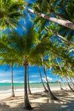 Palmträd på stranden av Palm lilla viken i Australien Arkivbild