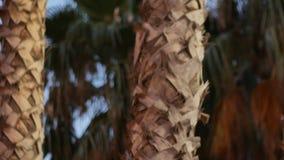 Palmträd på stranden Bearbetad tappningstolpe lopp, sommar, semester och tropiskt strandbegrepp lager videofilmer