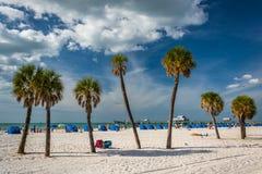 Palmträd på stranden i Clearwater sätter på land, Florida Arkivbilder