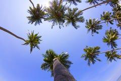 Palmträd på stranden i Sri Lanka arkivbild