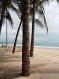 Palmträd på stranden och det lugna havet royaltyfri bild
