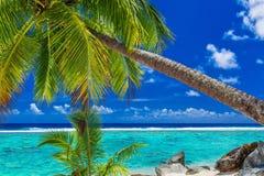 Palmträd på stranden, tropisk kock Islands, Rarotonga Royaltyfria Bilder