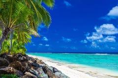 Palmträd på stranden, tropisk kock Islands, Rarotonga Royaltyfria Foton