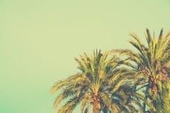 Palmträd på tonad ljus turkoshimmelbakgrund utrymme för kopia för 60-taltappningstil för text tropisk lövverk Sjösidahavstrand royaltyfria bilder