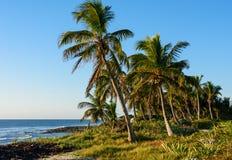 Palmträd på tropisk kust Royaltyfri Foto