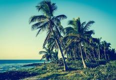 Palmträd på tropisk kust Retro stiliserad tappning Arkivbild