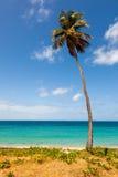 Palmträd på tropisk strand mot hav Royaltyfria Bilder