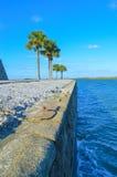 Palmträd på väggen Fotografering för Bildbyråer