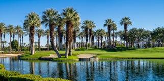 Palmträd Palm Desert golfbana Arkivfoton