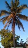 Palmträd Puerto Rico arkivbilder