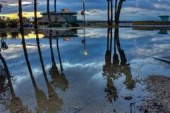Palmträd reflekterade i regnpölen royaltyfri foto