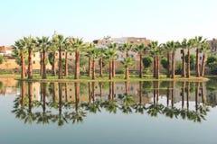 Palmträd reflekterade i vatten Arkivbild