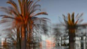 Palmträd reflekterade i vattenyttersidan av en simbassäng Abstrakt begrepp avkoppling stock video