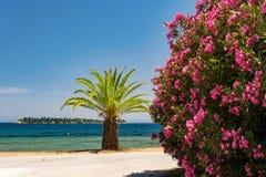 Palmträd, rosa buske och en ö Arkivfoton