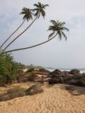 Palmträd-, sand- och stenkust vid havet arkivfoto