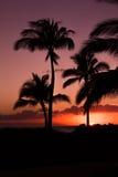 Palmträd silhouetted mot en purpurfärgad och orange himmel på solnedgången royaltyfri fotografi
