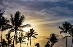Palmträd silhouetted mot härlig solljusbakgrund Arkivfoton