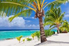 Palmträd som förbiser den tropiska stranden på Roratonga, kock Islands Arkivbilder