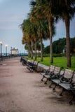 Palmträd som fodrar en gångbana Fotografering för Bildbyråer