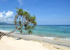 Palmträd som hänger över stranden med havet Arkivfoto