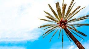 Palmträd som isoleras mot solig för loppsommar för blå himmel panorama- tropisk bakgrund för ferie arkivfoton