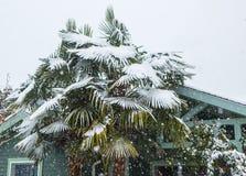 Palmträd som täckas i snö Arkivbild