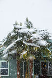 Palmträd som täckas i snö Royaltyfri Bild