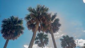 Palmträd som värma sig i solen i Sunshine state royaltyfri foto