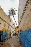 Palmträd som växer i Fes medina Royaltyfri Foto