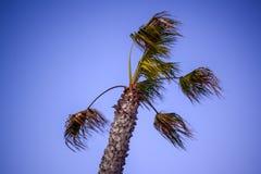 Palmträd som vinkar i vind för storm på skymning royaltyfri fotografi