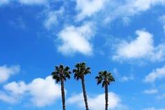 Palmträd symboler av den Kalifornien kusten Arkivfoto