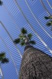 Palmträd till himlen mellan byggnaderna av staden av konster och vetenskaper royaltyfria bilder