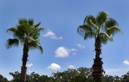 palmträd två Fotografering för Bildbyråer