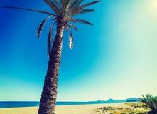 Palmträd under en glänsande sol Fotografering för Bildbyråer