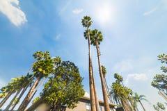 Palmträd under en glänsande sol i Hollywood fotografering för bildbyråer