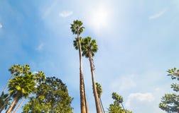 Palmträd under en glänsande sol i Hollywood royaltyfri bild