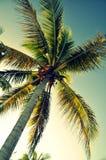 Palmträd underifrån - Panglao, Bohol ö, Filippinerna arkivbild