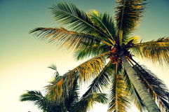 Palmträd underifrån - Panglao, Bohol ö, Filippinerna royaltyfri fotografi
