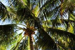Palmträd utöver blå himmel royaltyfri fotografi