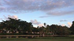 Palmträd vändkretsar, vind, afton, natur stock video
