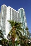 Palmträd vid det vita Miami tornet Arkivbilder