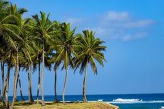 Palmträd vid havet Arkivfoto