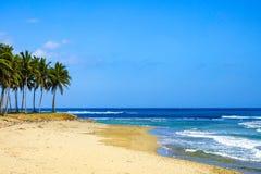 Palmträd vid havet Arkivfoton