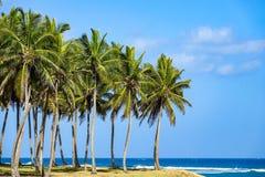 Palmträd vid havet Fotografering för Bildbyråer