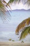 Palmträd vid havet royaltyfria foton