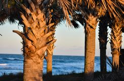 Palmträd vid sanddyerna längs kusten av Florida stränder i den Ponce öppningen och den Ormond stranden, Florida arkivbilder